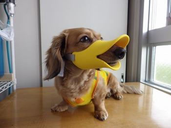 犬 無駄吠え OPPO quack クアック 05.jpg