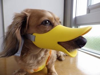犬 無駄吠え OPPO quack クアック 06.jpg