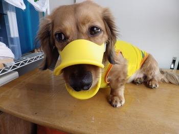 犬 無駄吠え OPPO quack クアック 07.jpg