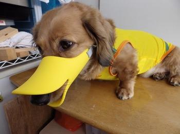 犬 無駄吠え OPPO quack クアック 08.jpg