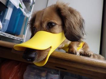 犬 無駄吠え OPPO quack クアック 10.jpg