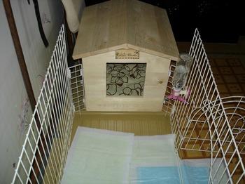 犬小屋 DIY 24.jpg